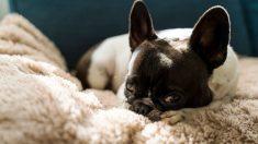 ¿Cómo son los perros más feos del mundo?