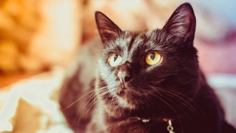 ¿Es posible que haya animales con Síndrome de Down?