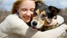Consejos para decidir qué raza de perro comprar