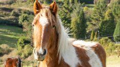 Algunos nombres para caballos originales