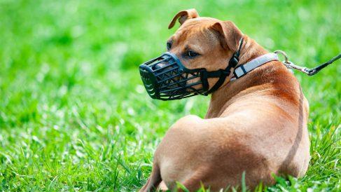 Cómo actuar contra la Rabia en perros: Síntomas y tratamiento
