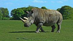 Desgraciadamente hay muchos animales en peligro de extincion en africa