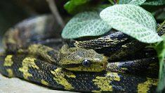 Descubre los 10 animales más venenosos del mundo