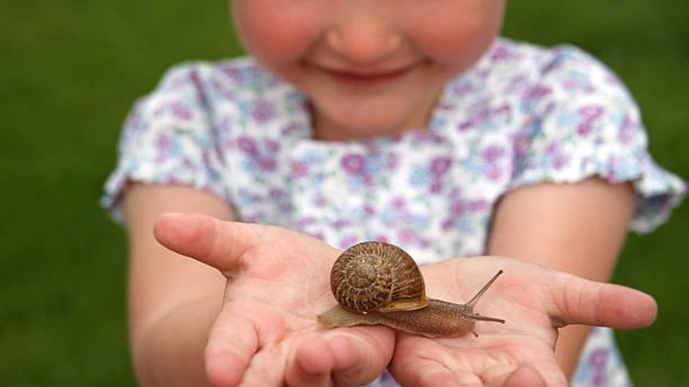 Guía sencilla de pasos para cuidar un caracol