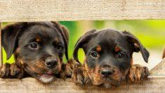 El origen de los perros se remonta a miles de años