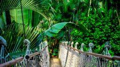 En el Amazonas hay una gran variedad de especies de árboles