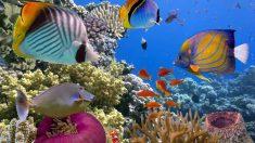 ¿Cuáles son los mejores nombres para peces?