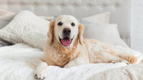 ¿Cuáles son los perros más cariñosos del mundo?
