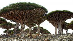 Lamentablemente hay muchos árboles en peligro de extinción en España