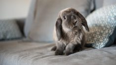 Consejos para la cría de conejos en casa