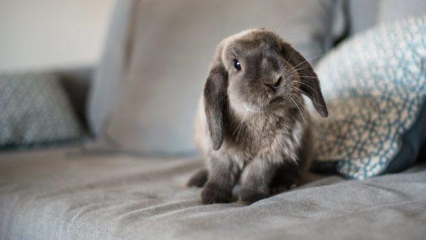 criar conejos en casa