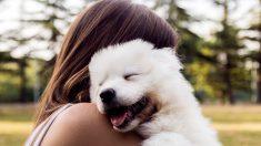 ¿Cuáles son los nombres para perros originales y bonitos?
