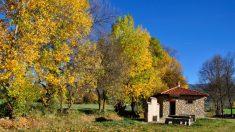 Los árboles pueden tener una gran influencia para luchar contra el cambio climático