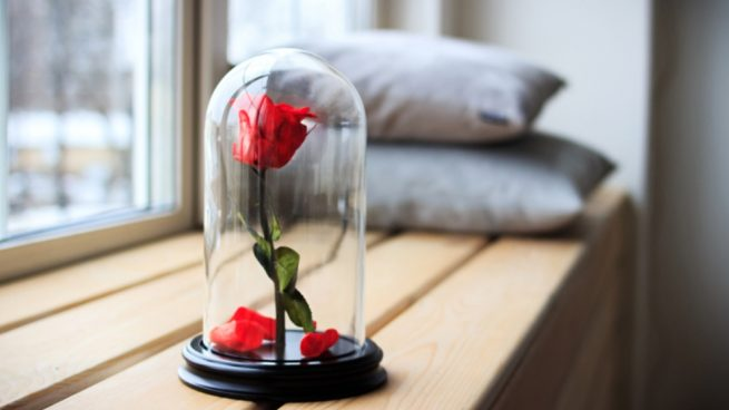 Conservar una rosa eterna o preservada