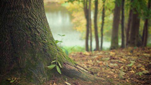Es muy importante vigilar todas las partes del árbol para ver si enferma