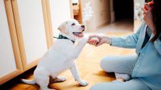 Cuál es la forma correcta de educar a un perro