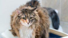 Algunos consejos para bañar a un gato (1)