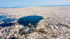Resulta desolador descubrir lo que estamos haciendo con nuestros mares