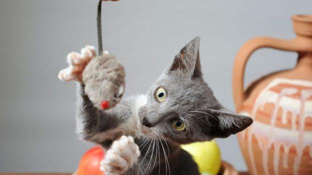entrenar a tu gato
