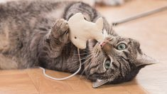 Gatos para juegos