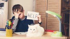 La forma de educar a un gato, trucos y consejos_