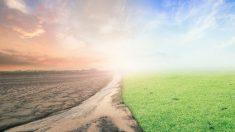 Desgraciadamente hoy en día hay muchos conflictos que ponen el peligro el medioambiente