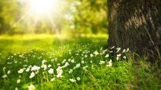 Curiosidades sobre el solsticio de verano que no conocías