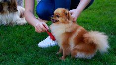 Los perros conocidos como más dóciles