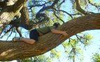 Contacto con un árbol
