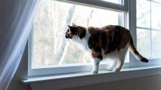 Los mejores trucos para encontrar a un gato perdido