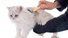 Cómo debemos elegir el cepillo adecuado para el gato