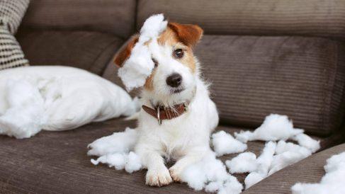 Cuáles son los mejores medicamentos para tranquilizar a los perros
