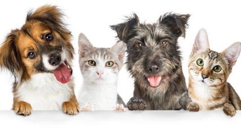 ¿Cómo conseguir una buena convivencia entre perros y gatos?