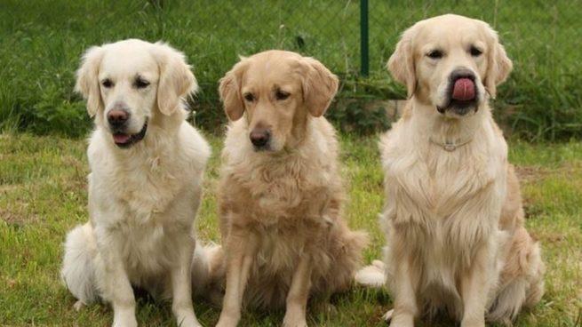 Es esencial que si tenemos un perro lo paseemos unas dos veces al día.