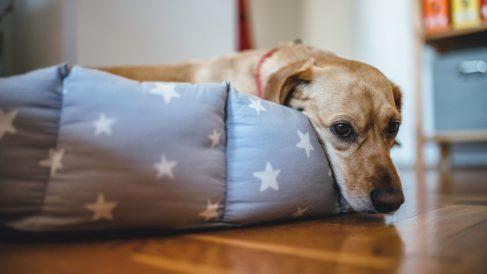 ¿Podemos saber si nuestro perro tiene una intoxicación?