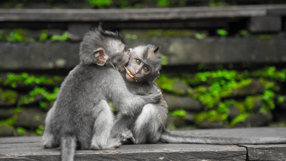 Los animales tienen diversas emociones similares a los humanos