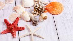 Pasos e ideas para decorar la casa con conchas marinas