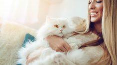 ¿Cómo cuidar a un gato de pelo blanco?