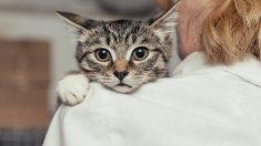 ¿Cuáles son las enfermedades más comunes de los gatos?