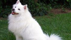 Descubre algunas de las razas de perros más grandes del mundo