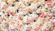 Cómo hacer un muro de flores para decorar paso a paso