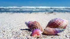Descubre qué animal es un molusco
