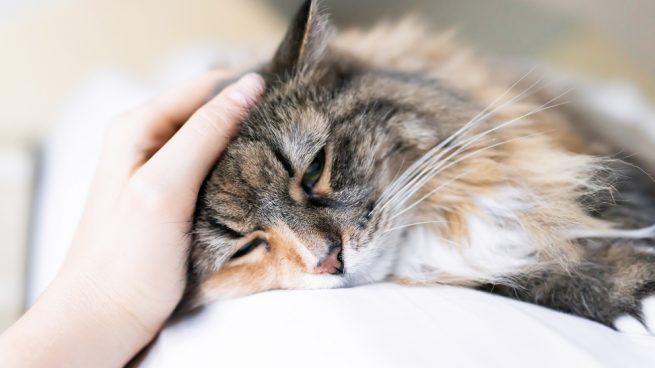 gato tiene lombrices