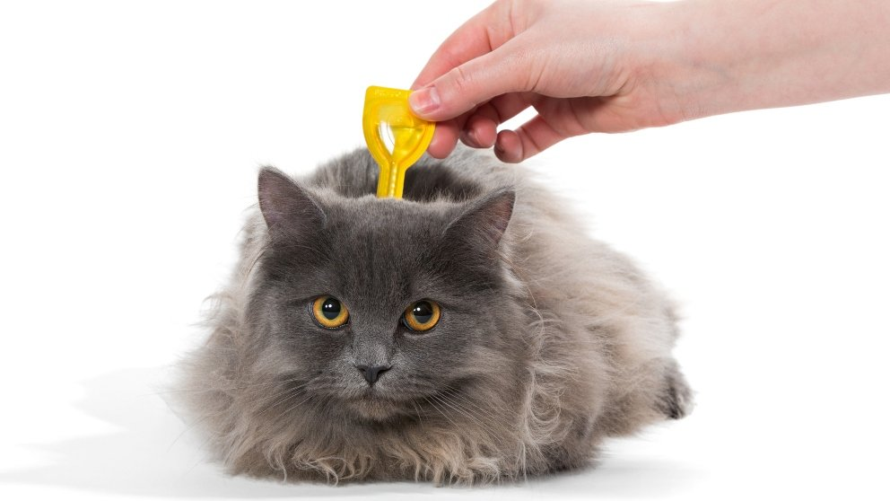 Cómo desparasitar gatos con remedios caseros
