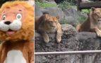Facebook: Un simulacro en un zoo sorprende a los leones