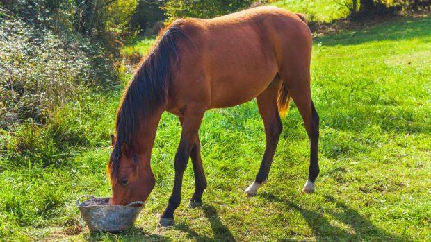 dieta adecuada para tu caballo