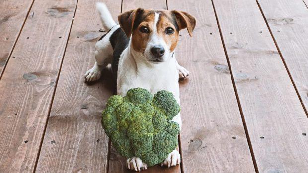 verduras para perro