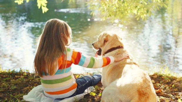 Cambios en el comportamiento del perro