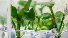 En ambientes contaminados hay muchas plantas que pueden ser de gran ayuda