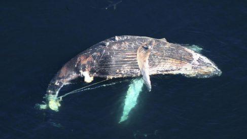 La pesca accidental mata a miles de especies